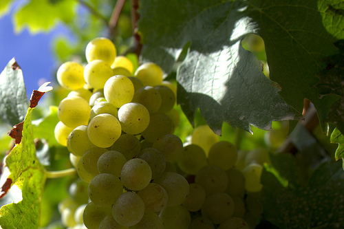 business lessons from vineyards