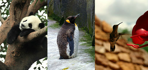 google's panda, penguin, hummingbird updates